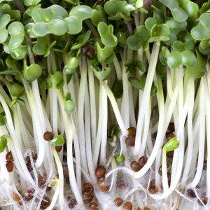 nasiona-brokulu