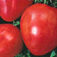 pomidor-bawole-serce