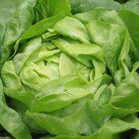 salata-cud-voorburgu