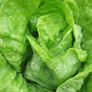 salata-dippego