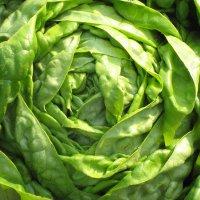 salata-humil