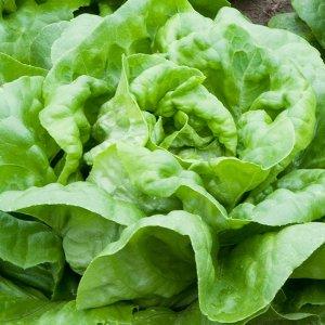 salata-krol-majowych