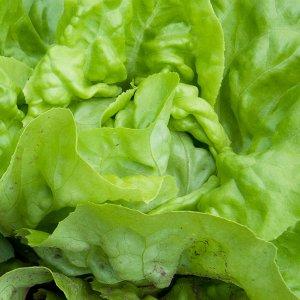 salata-michalina