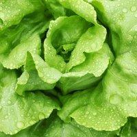 salata-nochowska