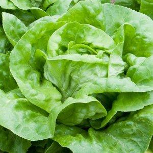 salata-syrena